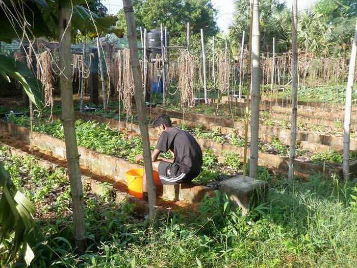 În Auroville se practică agricultura integral ecologică.jpg