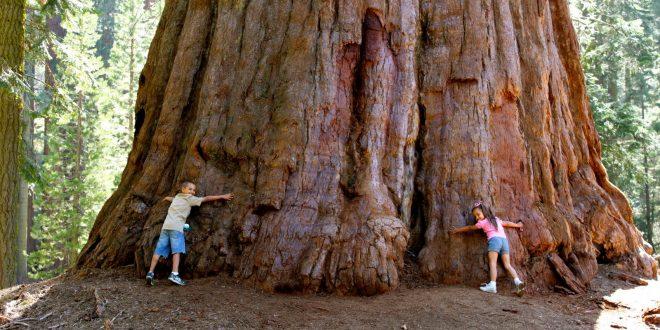 sequoia-660x330.jpg