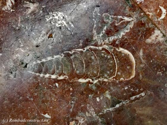 fosila-la-statia-de-metrou-politehnica.jpg