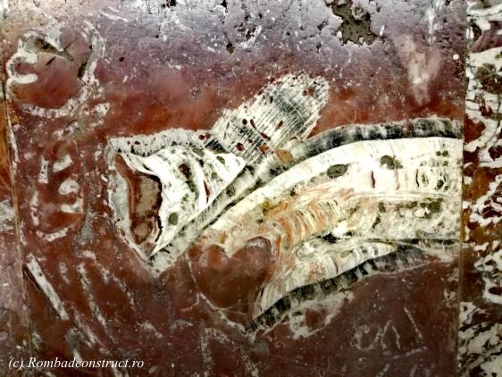 fosile.jpg
