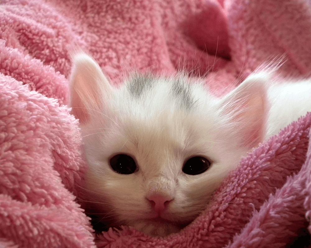 informatii-pisici-05.png